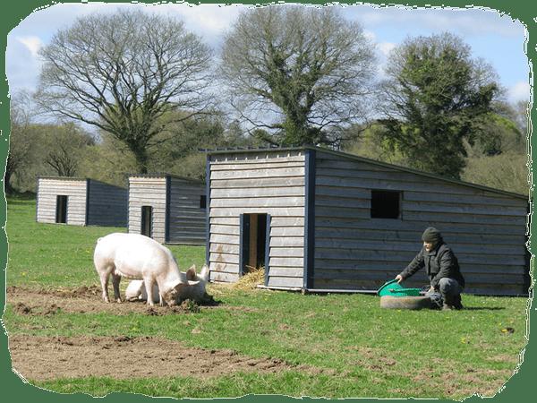 Alain Scouarnec - Eleveur de Porc - Fournisseur Cochon des Prés (Source image : les-prairies-bio.fr)